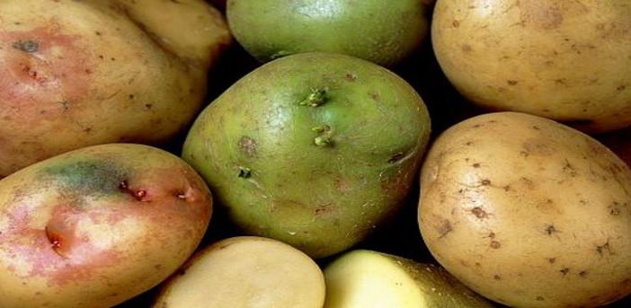 cartofi verzi din varicoză