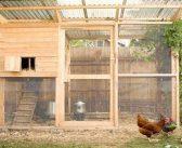 Cum sa construiesti un adapost pentru pasari