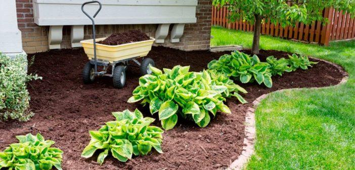 Ce este mulcirea si de ce este importanta pentru sol?