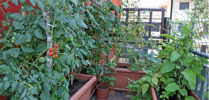 Gradina din balcon: plante care rezista la frig