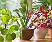 Ingrijirea plantelor de interior in 5 pasi simpli