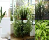 7 Plante de interior usor de intretinut de catre incepatori
