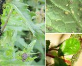 Păduchii plantelor – reţete bio şi soluţii ecologice pentru a scăpa de ei
