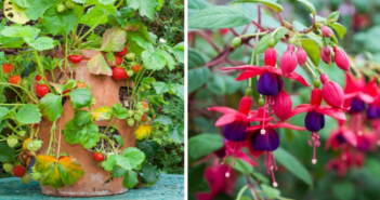 Plantele ideale pentru un apartament cu balcon